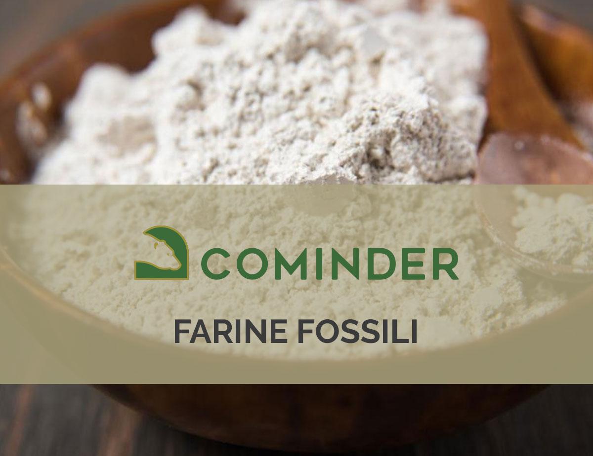 Che cosa sono le farine fossili e quali sono le loro applicazioni